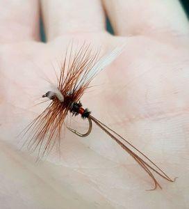 Flies null fanwing royal coachman