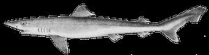 Requin-Hâ (Milandre)