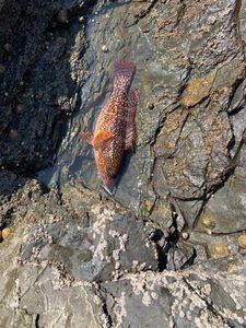 Vieille de Corail