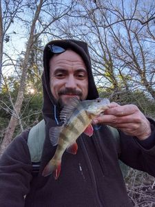 European Perch — Pierre Duchemin