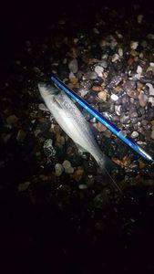 European Bass (Seabass) — Romain Dumaitre