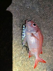 Pinecone Soldierfish