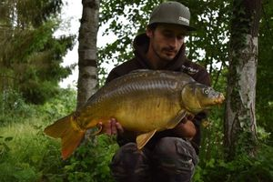 Mirror Carp — Brooks CarpFishing