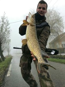 Northern Pike — Julien Bourgeois