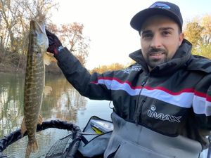 Northern Pike — Florian Ferrandis