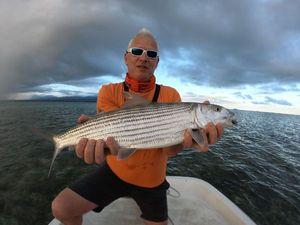 Poisson Banane (Bonefish) — Tynilla Fishing