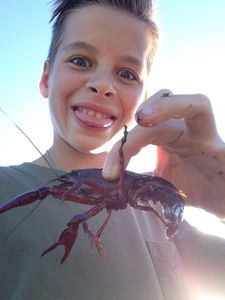 Spinycheek Crayfish — Adrien Martiniere