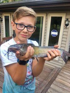 Sharptooth Catfish