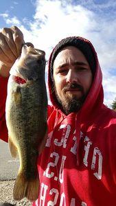 Largemouth Bass — Alexandre Cassin
