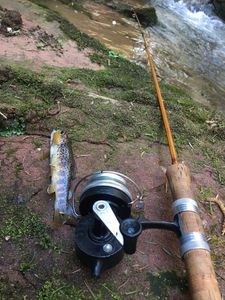 Brown Trout — Crack Fishing