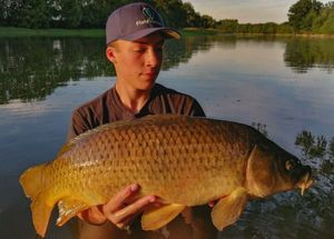 Common Carp — Matthieu VOLANT