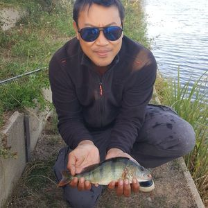 European Perch — Tony Sam