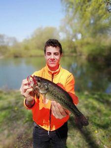 Largemouth Bass — Gaël Humblot