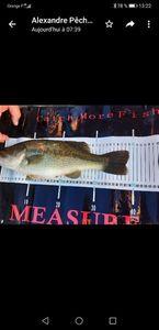 Largemouth Bass — Marc SARRAZIN