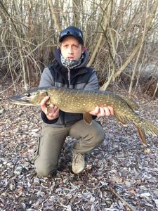 Northern Pike — Cedric Dufour