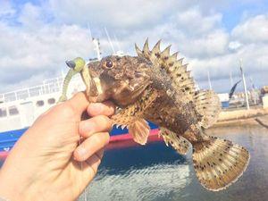 Brown Scorpionfish — Fishing Porquerolles