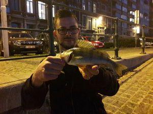 European Perch — Benjamin Manguette