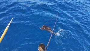 Espadon Voilier Atlantique (Sailfish)