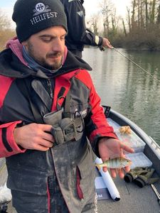 European Perch — Canito Scarnafishing