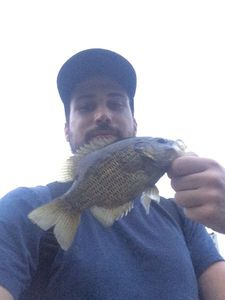 Rock Bass — Thomas Aubry