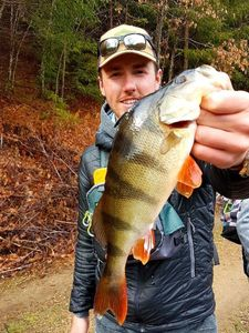 European Perch — Maxime Tourrisseau