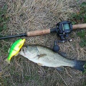 Black Bass (Achigan à Grande Bouche) — Kevin Deschamps
