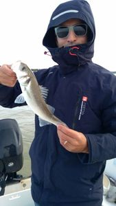 European Bass (Seabass) — Olivier Armand