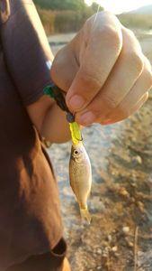 Roach — Esoxgab Fishing