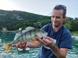 European Perch — Florent Allart