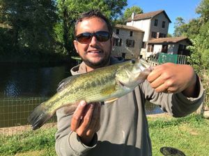 Largemouth Bass — Manu Roux