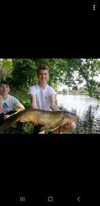 Common Carp — Aubin Delanoë