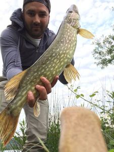 Northern Pike — Vince Tp