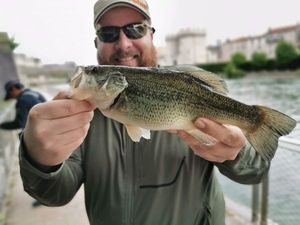 Largemouth Bass — Laurent Picard