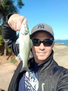 European Bass (Seabass) — Pierre Cacitti