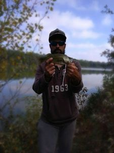Largemouth Bass — D . Thony