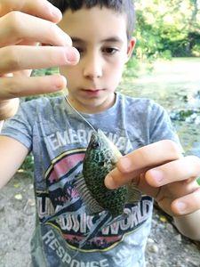 Green Sunfish — Nicolas Jouanserre