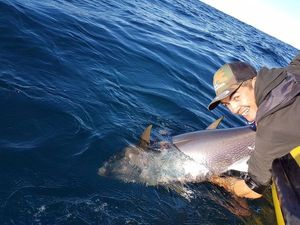 Bluefin Tuna — Steven Phangrath