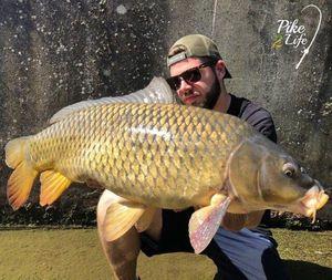 Common Carp — Pike 2Life