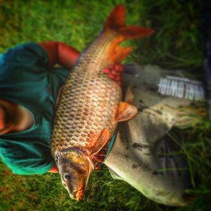 Common Carp — Julian Leonard