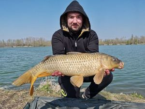Common Carp — Remi Vantalon