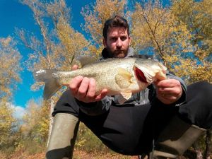 Largemouth Bass — Jeremie Bonnet