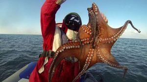 Common Octopus — Raph CSMPêche