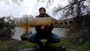 Common Carp — Pierre Chretien