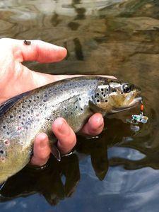 Brown Trout — Charles Testut
