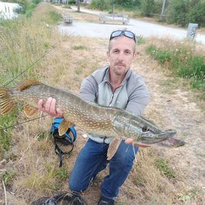 Northern Pike — David Decuyper