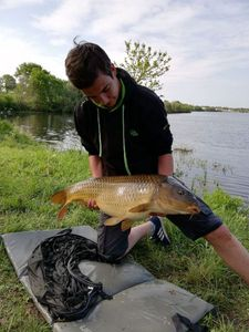 Common Carp — Bastien Gendreau