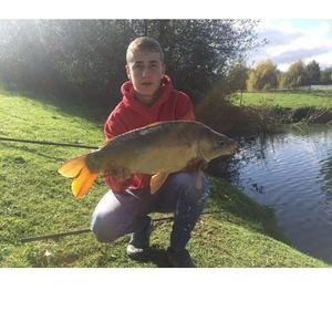 Mirror Carp — multifishing