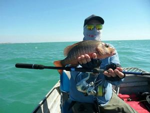 Mangrove Red Snapper — Sebastien Pelletier