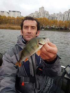 European Perch — Sylvain Berland