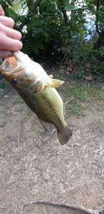 Largemouth Bass — Esteban Garbay